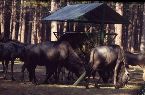 Safaripark Gänserndorf (1983)